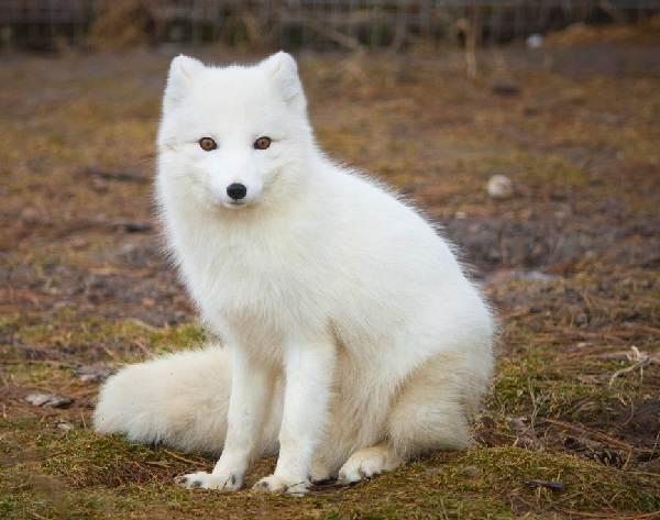 animal totem animal de poder espirito guia xamanismo
