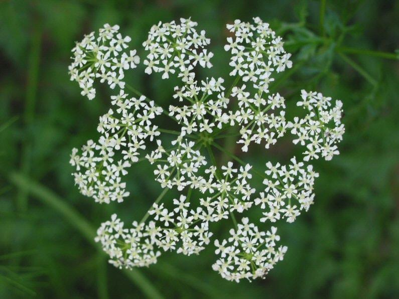 defumação defumar limpeza ambiente energia negativa ervas plantas