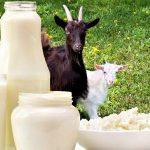 Indicações e benefícios do leite de cabra