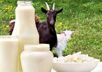 leite de cabra saúde dieta alimentação criança diabetes insonia perda de peso