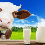 Os benefícios e malefícios do leite de vaca