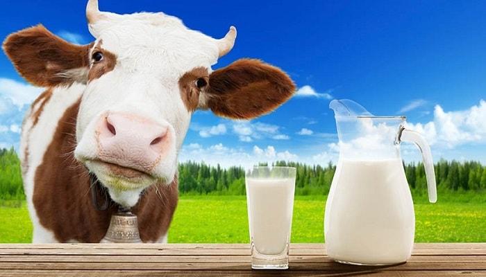 leite de vaca saúde dieta alimentação perda de peso crianças nutrição