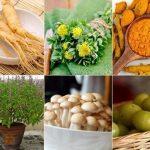Adaptógenos de origem vegetal