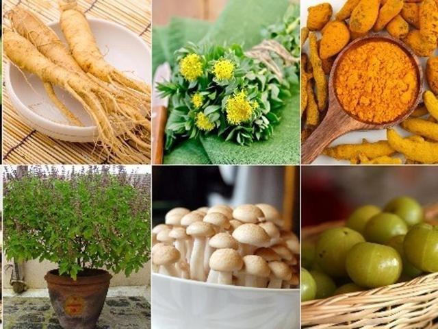 Adaptógenos vegetal imunidade tonico saúde