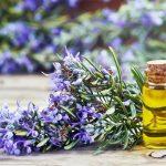 Óleo essencial de alecrim: propriedades, usos e contraindicações.