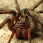 Animal Espiritual Aranha (Atualizado)