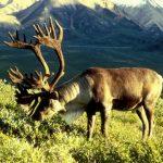 Abordagem Natural: carne – comer ou não comer?
