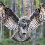 Animal Espiritual Coruja (Atualizado)
