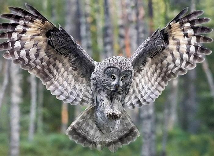 coruja totem xamanismo animal espiritual